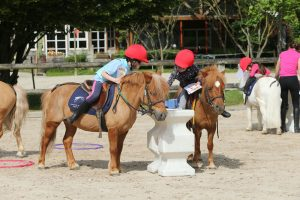 Formation Assistant d'Equitation 2021